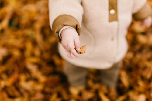 Child in Brown Sweater Holding Brown Dried Leaf