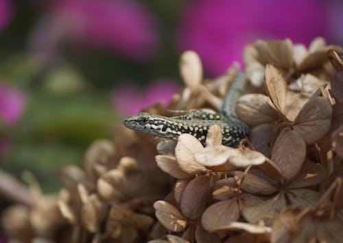 Small lizard lying on flowers