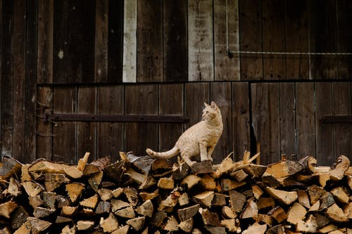 Cat on Brown Firewood
