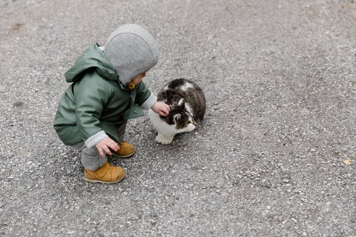 Person in Gray Hoodie Holding White and Black Cat