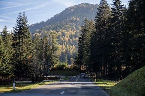 Gray Concrete Road Between Green Trees Near Mountain