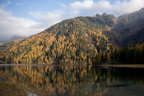 Green and Brown Trees on Mountain Beside Body of Water