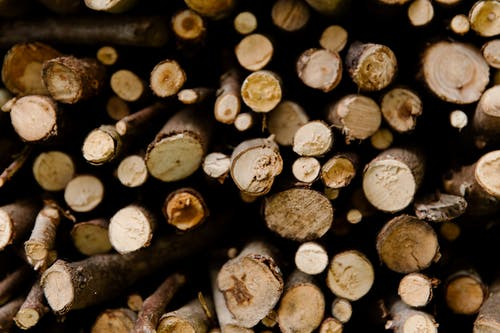 Close-Up Photo Of Wood Logs