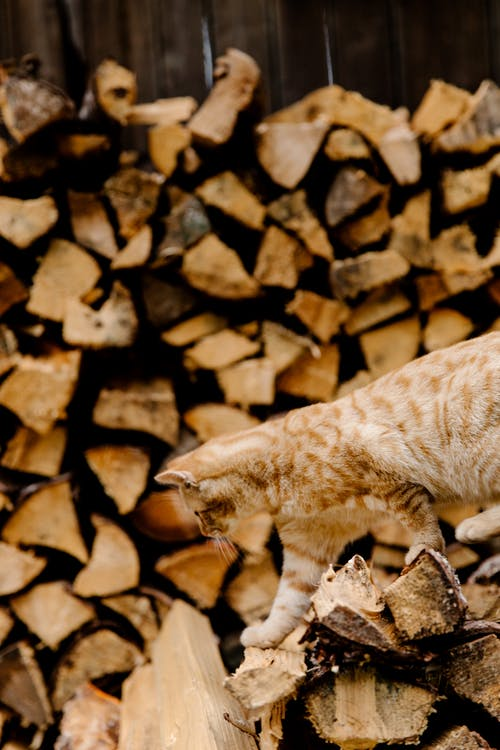 Kostenloses Stock Foto zu baumprotokolle, brennholz, brennhölzer