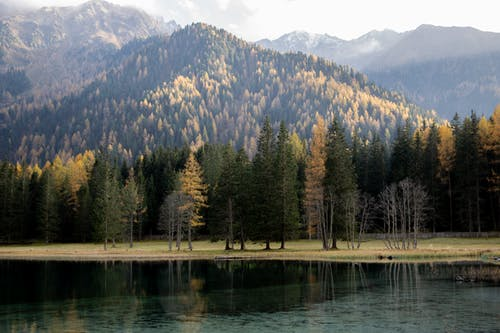 Photo Of Pine Trees Beside Lake