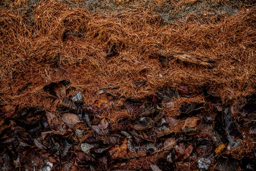 Dry pine needles on rocks in forest