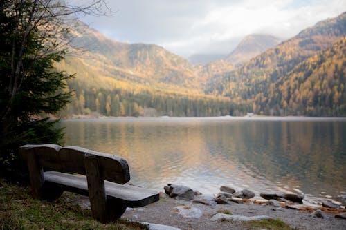 Brown Wooden Bench Near Lake