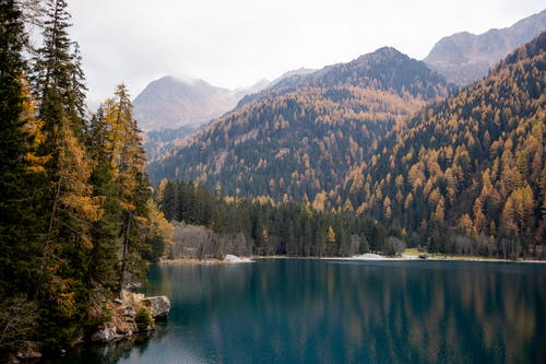 Green Trees Near Lake