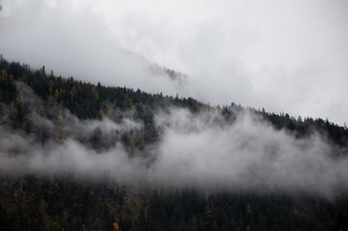 Photo Of Pine Trees Under Cloudy Sky