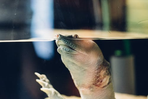 Ingyenes stockfotó akvárium, teknős, teknősbéka, víz témában