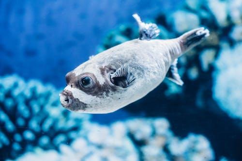 Ingyenes stockfotó akvárium, hal, halak, kék témában