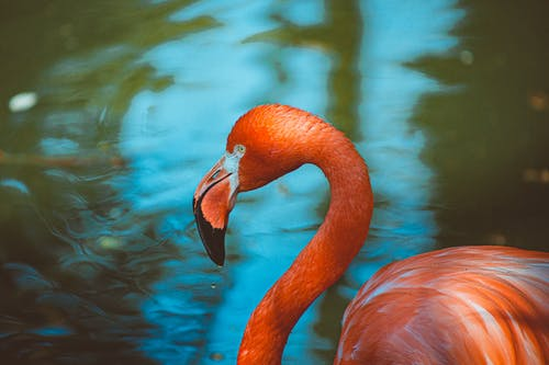 Close-Up Photo of Flamingo