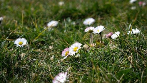Free stock photo of macro, spring, white flowers