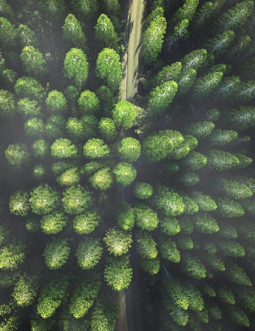 Ilmainen kuvapankkikuva tunnisteilla biologia, fiilis, ikivihreä, kasvikunta