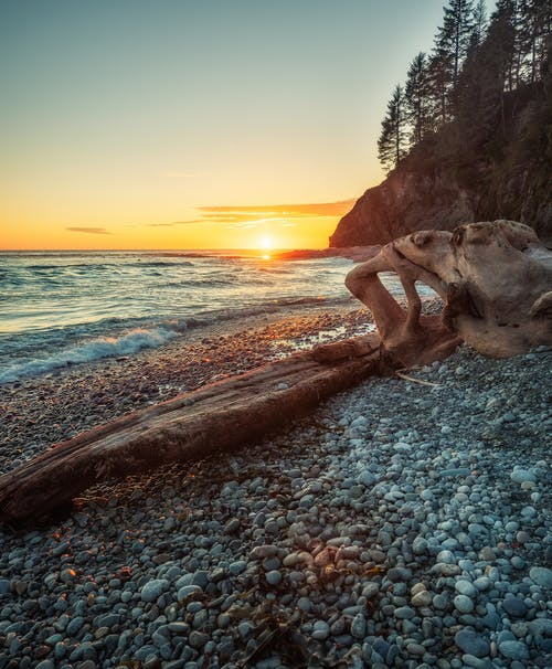 Driftwood on Seashore during Sunset