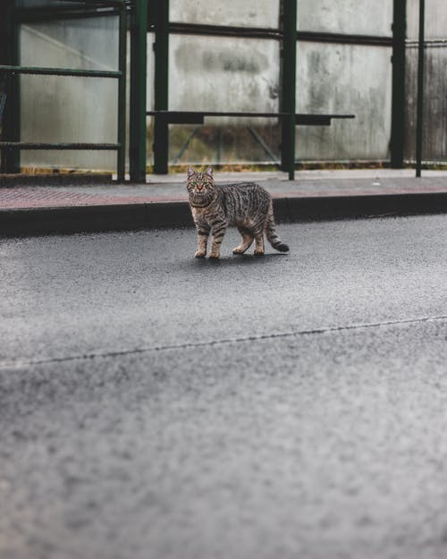 Brown Tabby Cat Walking on Gray Concrete Road