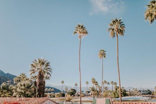 Foto profissional grátis de bem-estar, Califórnia, céu azul, céu de brigadeiro
