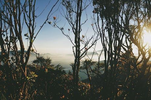 Photos gratuites de arbre, aube, automne