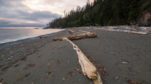 Brown Wood Log on Beach