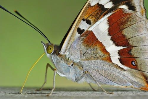 Close-Up Photo Of Moth