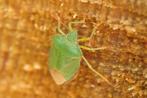 Green Insect on Brown Surface