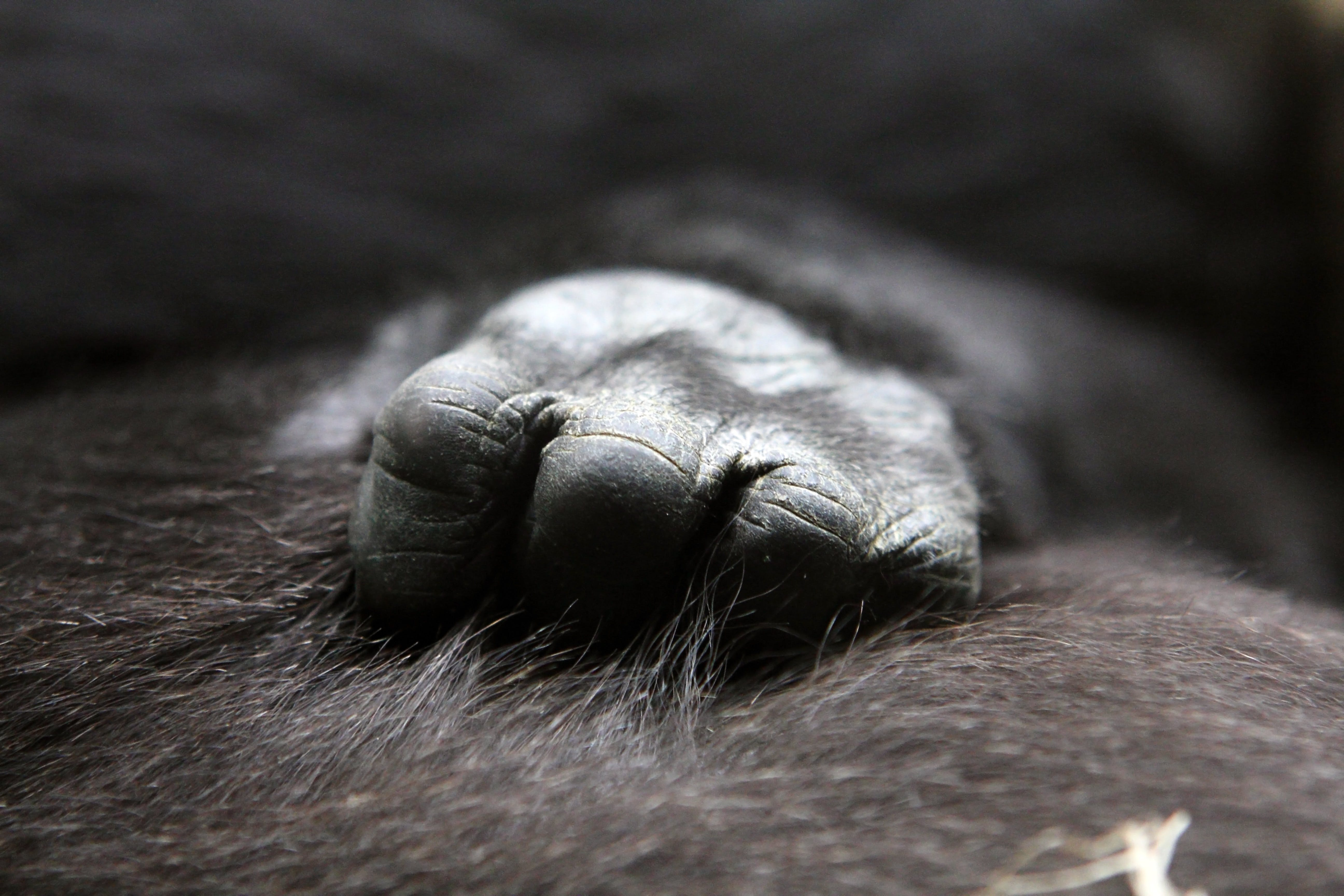 Close Up Photo of Ape's Hand