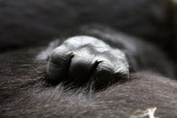 hand, blur, fur