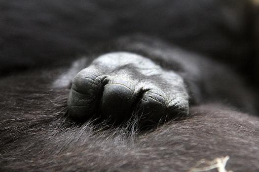 Close Up Photo of Ape's Hand