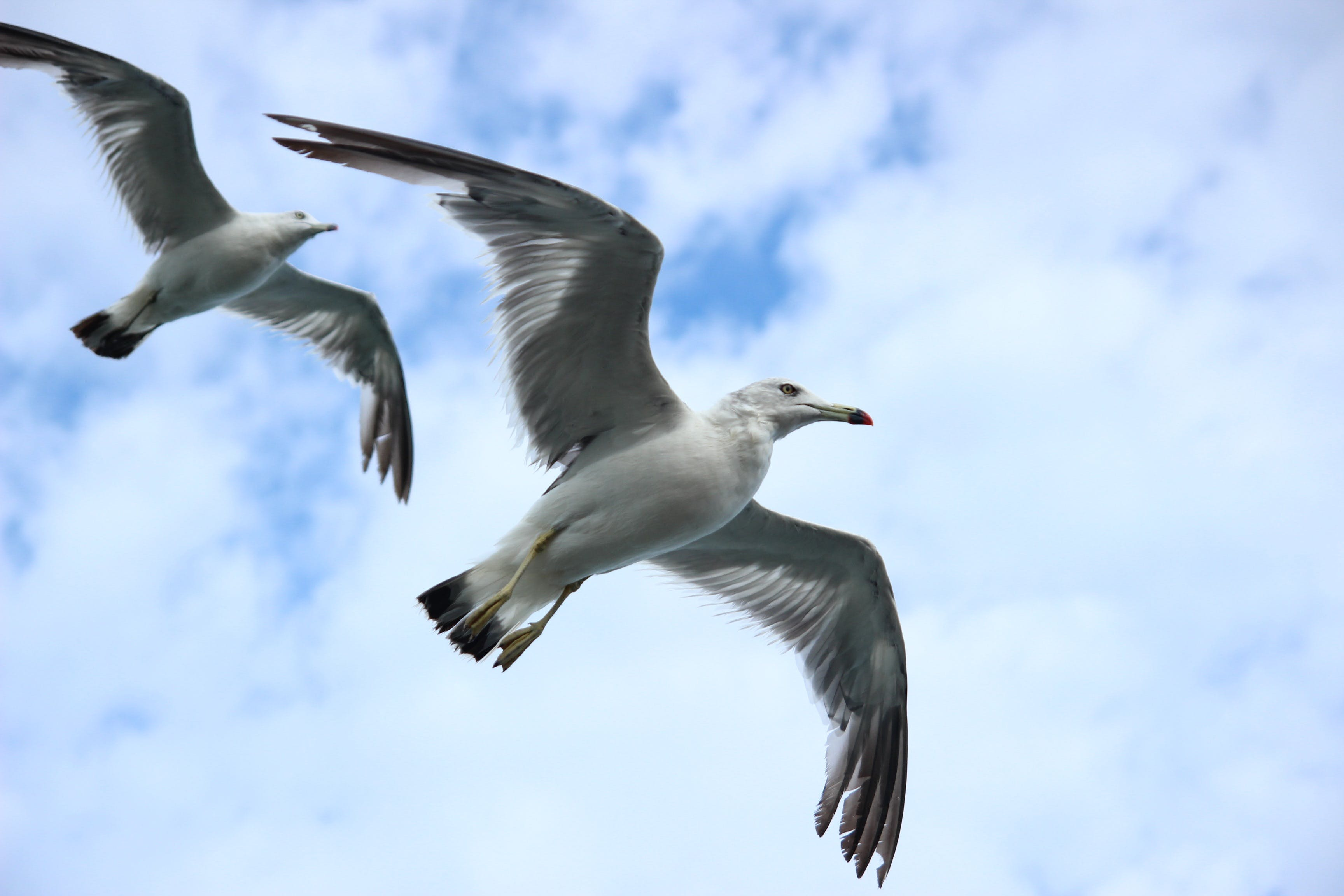 Two White Seagulls Flying Under Blue and White Sky
