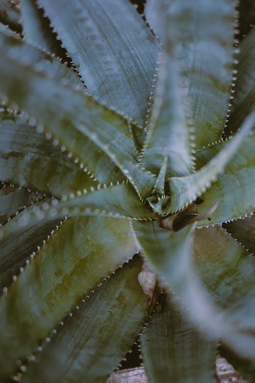 Selective Focus Photo of Succulent Plant