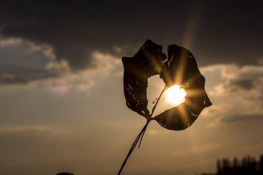 Free stock photo of light, love, heart, sun