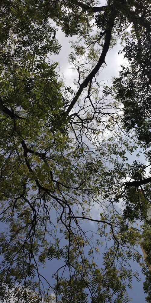 Fotos de stock gratuitas de árbol, cielo azul, cielo hermoso