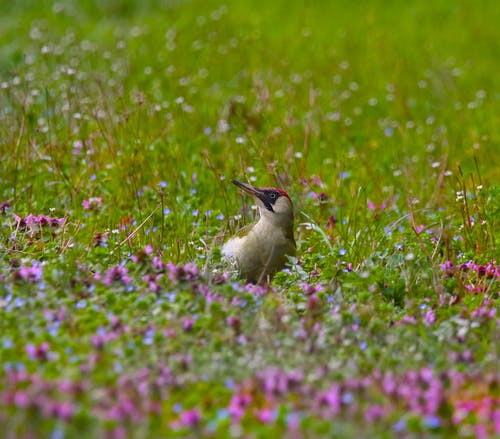 Brown Bird on Green Grass With Wildflowers