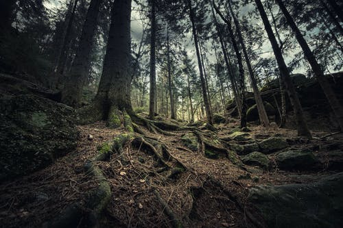Low Angle Photography Of Trees In The Woods