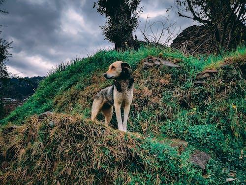 Free stock photo of after rain, animal, brown dog