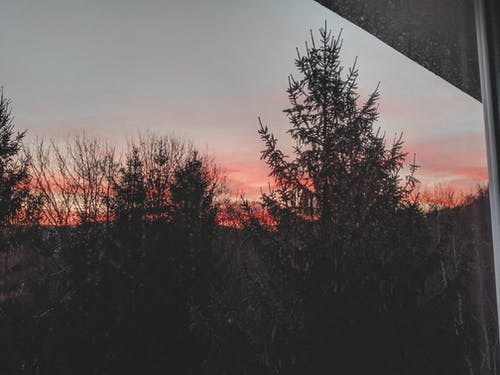 Free stock photo of beautiful sunset, forest, sunset colors