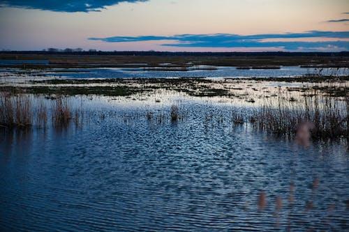 Kostenloses Stock Foto zu mokra trawa, mokradła, niebo, niebo zachód słońca