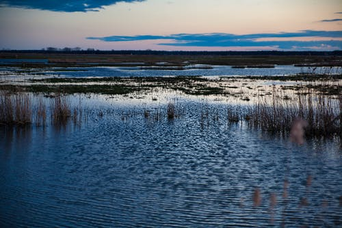Free stock photo of mokra trawa, mokradła, niebo, niebo zachód słońca