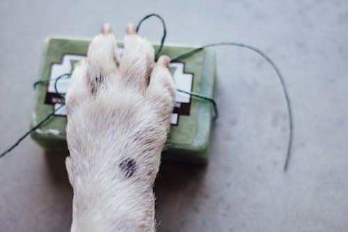 Gratis arkivbilde med antibakteriell, antiseptisk middel, dyr, håndlaget