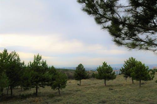 Free stock photo of ağaçlar, çevre, doğa, manzara