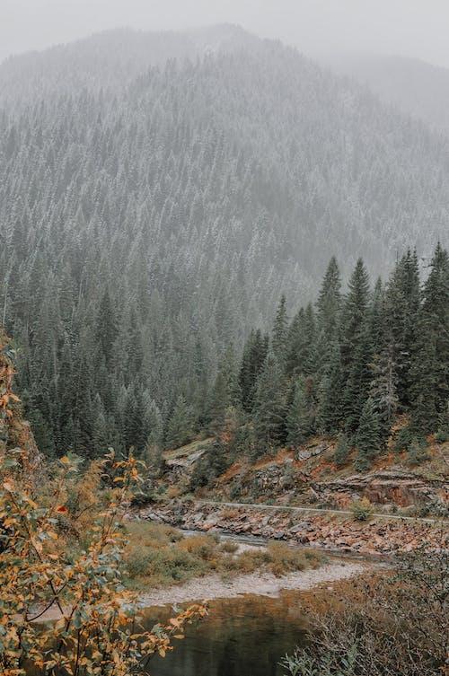 Безкоштовне стокове фото на тему «гора, дерева, застуда»