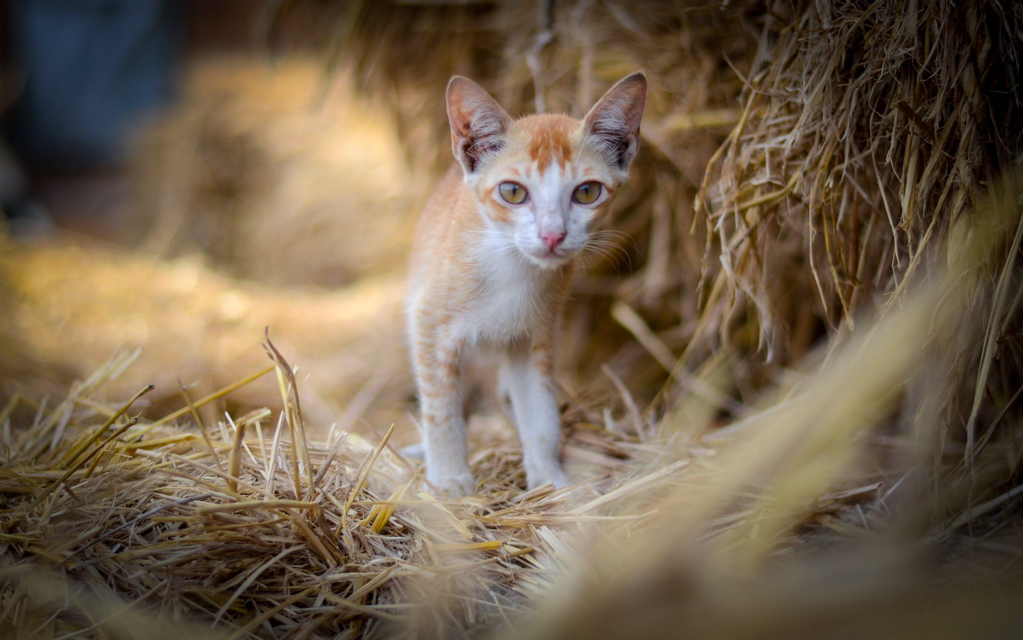 Foto stok gratis tentang anak kucing, kucing, kucing jalanan