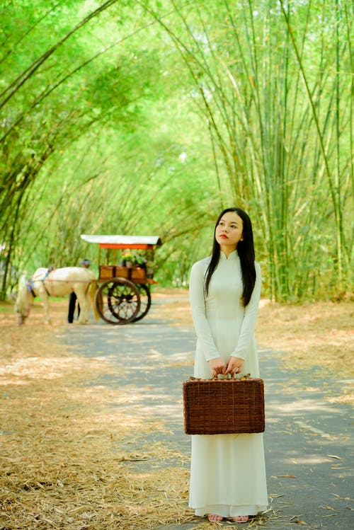 Stylish young Asian woman standing in bamboo grove