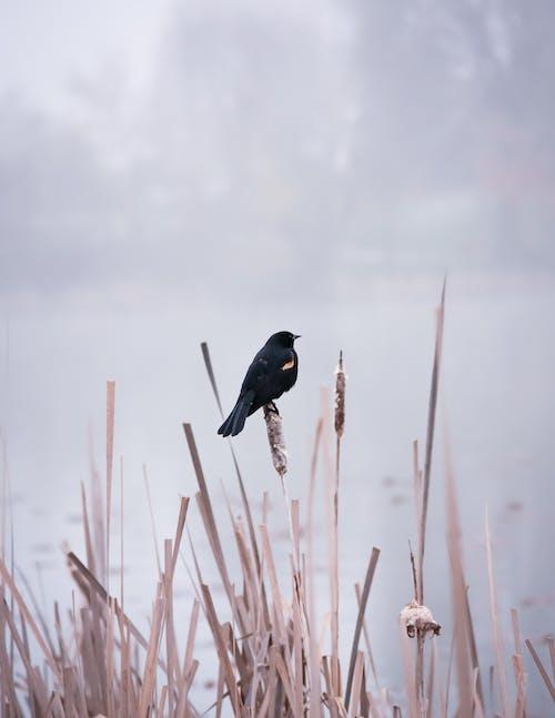 Black Bird On Brown Plant