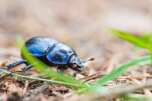 Free stock photo of insekt, kafer, makrofotografie