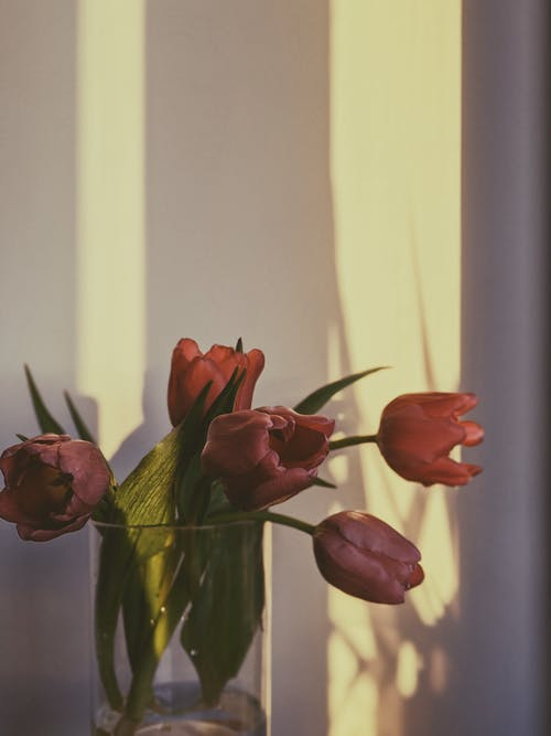 Red Tulips In Clear Glass Vase