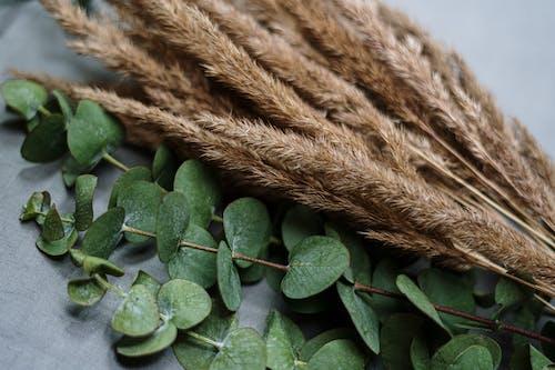 Green Leaves on Brown Rope