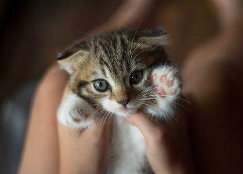 Photo Of A Tabby Kitten