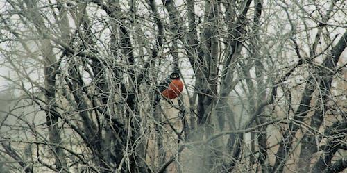 Immagine gratuita di albero, arancia, inverno, solo