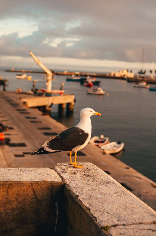 Gratis lagerfoto af anløbsbro, badebro, fugl